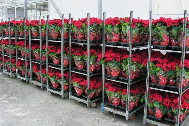 Рассада для цветов бизнес