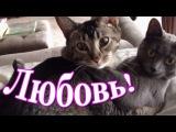 Топ приколы с животными 2016 Любовь кошек | Top 10
