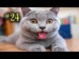 Ржачные приколы с животными Котами и собаками