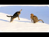 Забавные Кошки 2015! Смешное Видео с Кошками! Funny Cats Videos 2015 New /
