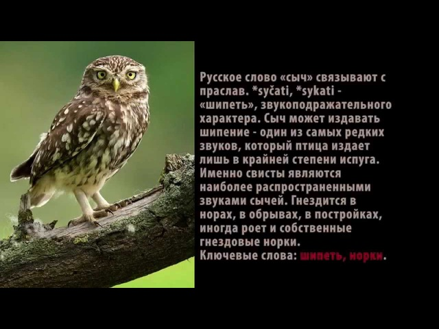 Александр Домбровский: Звездные крепости - газораспределители (часть 3)
