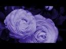 Волшебство преображения. Распускающиеся цветы