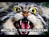 Манул. Кот, победивший время