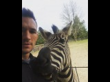 Michael Chandler on Instagram That moment your #zebra bites your nipple. All I wanted do do was kiss him. #zeb #zebby #myzebra #sicko #zebrainmissouri #ironmichael