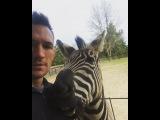 Michael Chandler on Instagram That moment your #zebra bites your nipple. All I wanted do do was kiss him. #zeb #zebby #myzebra #sicko #zebrainmissouri #ironmichael
