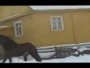 цыганские лошади на канале romadrab