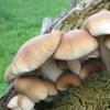 Выращивание грибов...