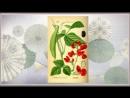 Бобы турецкие Phaseolus coceineus