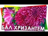 Бал Хризантем Никитский Ботанический сад, Крым