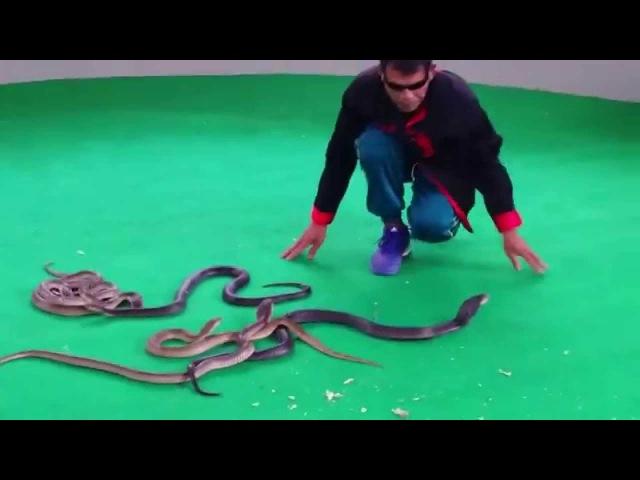 Змеиное шоу Плюющиеся кобры