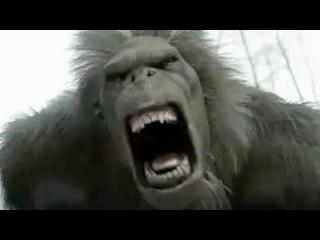 5 Вымерших Животных, Которые Могут Оказаться Живыми