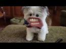 если бы у собак был человеческий рот