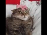 Кот и цветок