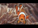 Symbiosis Anemonefish Reef Life of the Andaman Part 18