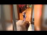 Прикол Прикольные Видео 2015 Про Животных Подборка
