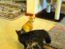 Кот играет со статуэткой кота