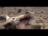 Ultimate Survival - Bear Grylls eet geit en kameel.