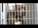 Приют для собак в Лос Анджелесе США Видеоблог