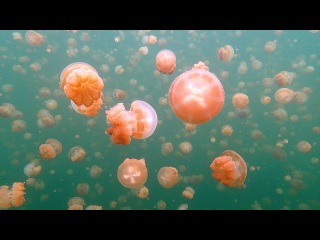 Jellyfish Lake. Republic of Palau. Micronesia.