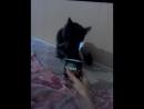 мой котейка,моя прелесть.Ну просто обожает кушать Активиа😀