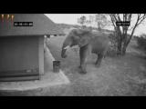 ПРИКОЛЫ С ЖИВОТНЫМИ. Слон убирает мусор