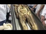 Анатомия. Мышцы бедра. Часть 2