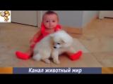 Приколы про животных с детьми. Маленькие дети и собаки