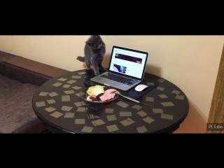 Как отучить кота ходить по столу 😃