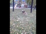 Орех, Арчик, Бади и Шадэ колбасятся на прогулке в парке :)