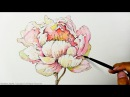 How to Draw Paint a Peony Flower with Ink and Watercolor - Level 5