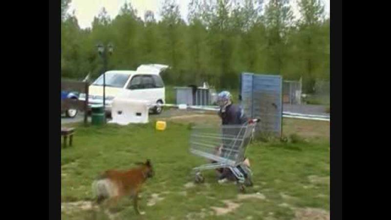 Centre canin saint roch frappe muselée