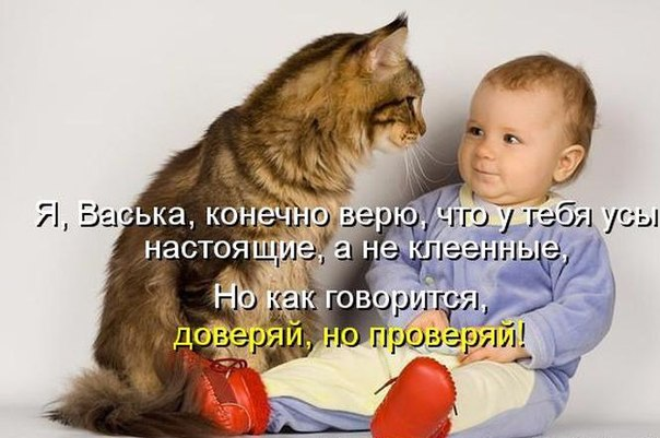 http://cs628531.vk.me/v628531201/4931/OQrvveaDw1E.jpg