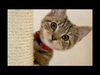 Кото - Няшки !!! Веселенькая нарезка фото приколов про котят.