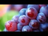 Виноград: посадка, выращивание, обрезка,сорта
