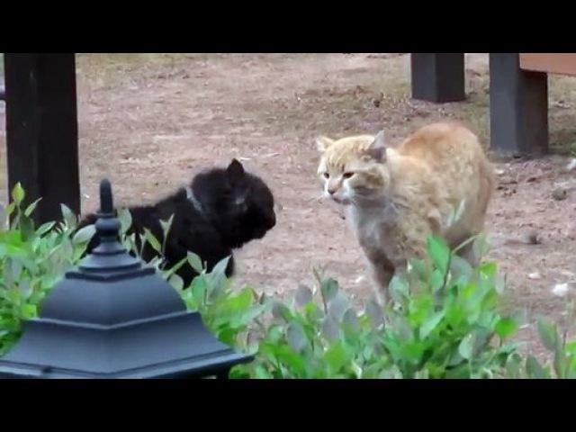 Драка котов, с озвучкой из фильма - Видео Dailymotion