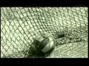 Немецкие солдаты о начале войны с СССР Пишет Олег Вещий (arctus) 2017-05-09 21:00:00 Немецкие солдаты о начале войны с СССР Опубликовано: 8 нояб. 2014 г. 43Lq_DPF7qs Как воспринимали войну с Советским Союзом солдаты вермахта? Приказ фю