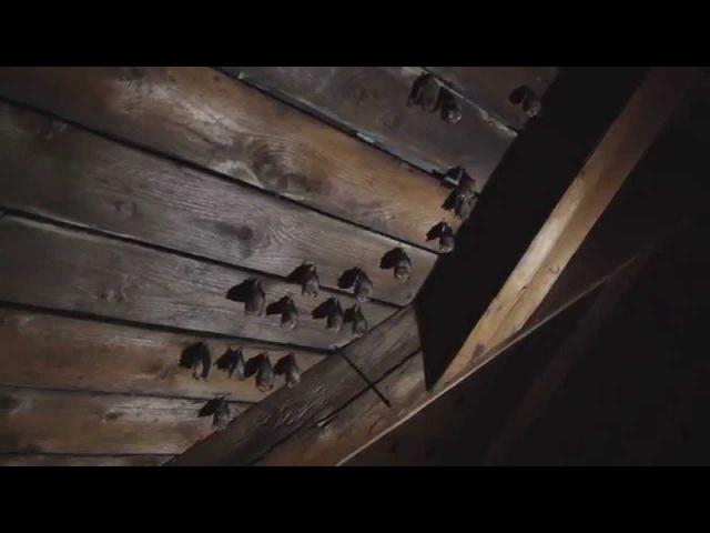Фильм о летучих мышах -