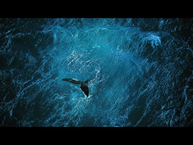 Planet Ocean [UK]- the film by Yann Arthus-Bertrand Michael Pitiot