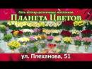 Планета Цветов Плеханова 51