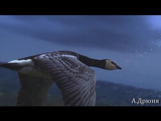Крылья (А.Дрюня... Cover Vers.Наутилус Помпилиус)