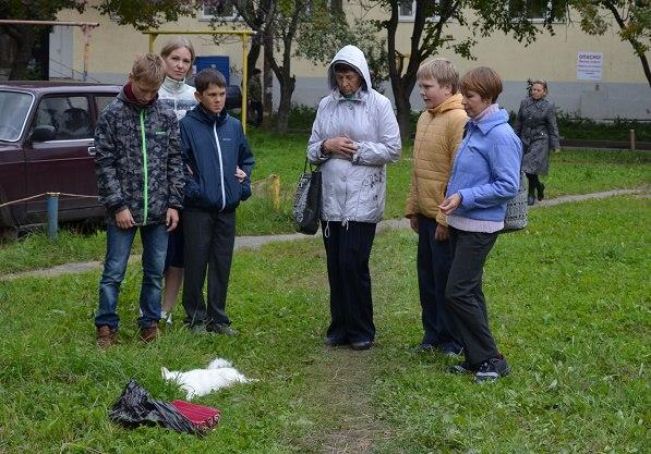 Житель Усть-Джегуты выбросил пять кошек из окна 10-го этажа