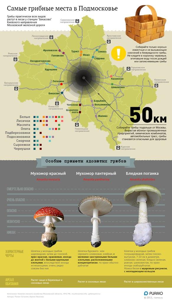 белые грибы в августе в подмосковье