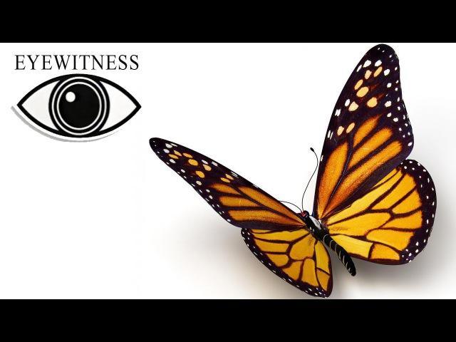 Все Про Бабочек I BBC Документальный Фильм | Eyewitness | Butterfly