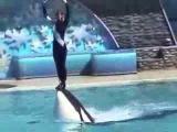 Водное шоу дрессированные дельфины. Сан Диего.