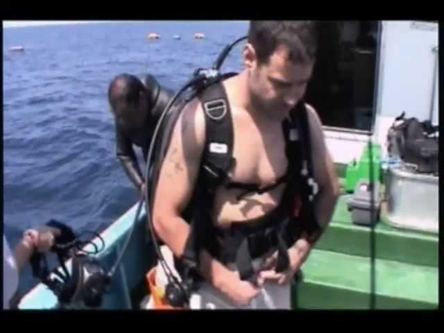 Jackass Whale Shark Gummer