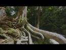 Black-eyed  - Rinat Karimov׃  Красивые Восточные Песни о Любви׃ Кавказские песни׃ Музыка юга