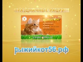 Груминг рыжий кот оренбург