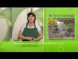 Как правильно поливать овощи (часть 2)