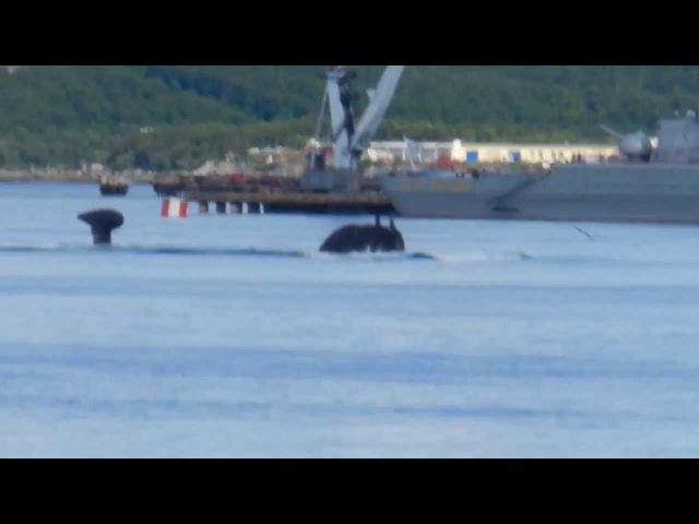 Красивое всплытие русской подлодки Russian submarine surfacing