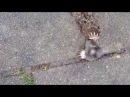 Крот застрял / Vroege Vogels - Mol tussen stoeptegels - Mole stuck in pavement